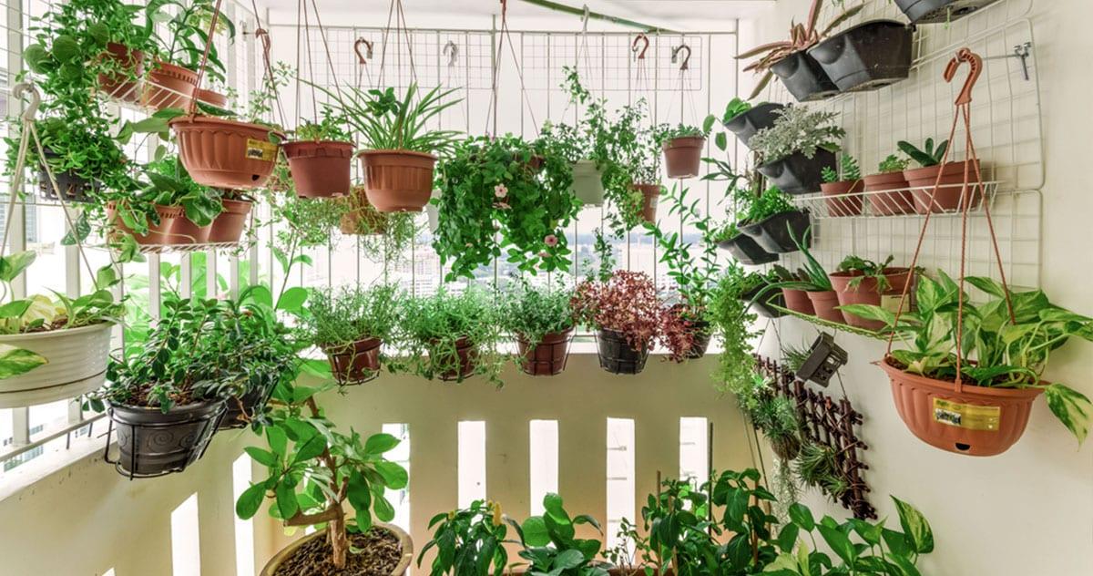 Horta em apartamento: como fazer e ideias para te inspirar